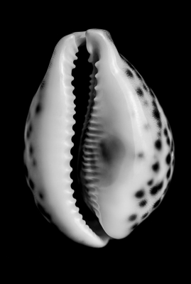 product-photography-shell.jpg