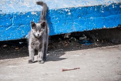 WebberPhoto-Morocco8.jpg