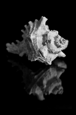 Seashells2-2.jpg
