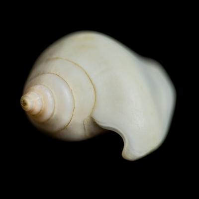 Seashells2-4.jpg