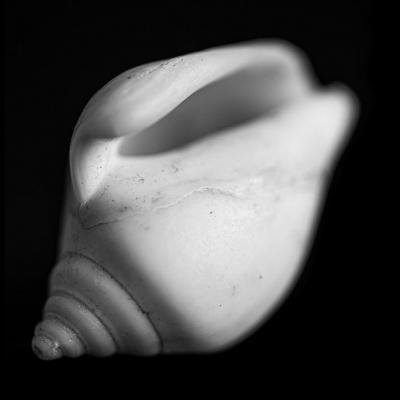 Seashells2-5.jpg