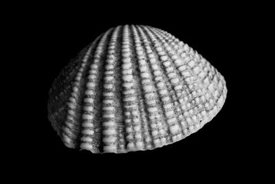 Seashells-8.jpg