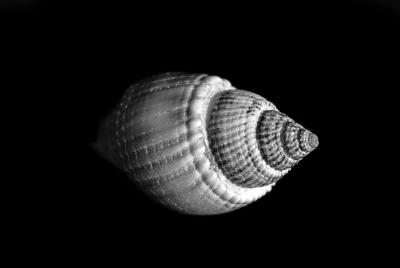 Seashells-9.jpg