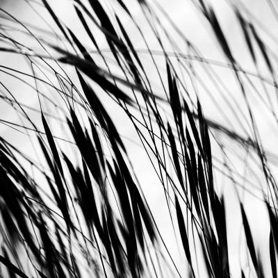 plants19.jpg