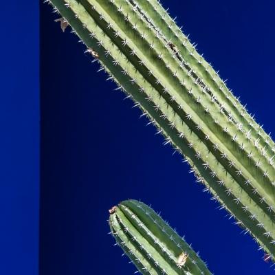 plants4.jpg