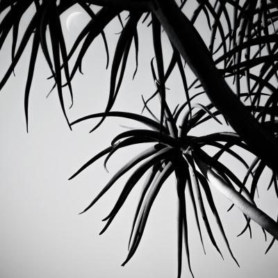plants6.jpg