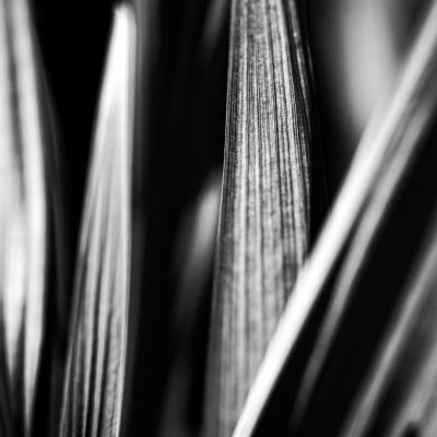 plants23.jpg